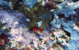 Coral, Solomon Islands, by Kelsey Schwenk
