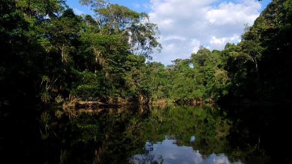 Photo: Oxbow lake, Yasuni National Park, Ecuador. Credit: Geoff Galice.