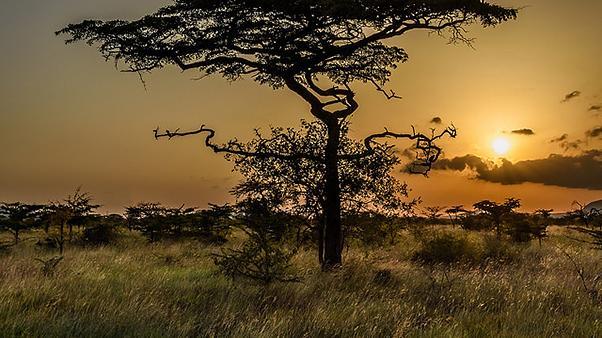 One Tree Plain, CC BY-NC-SA 2015 Geoff Livingston
