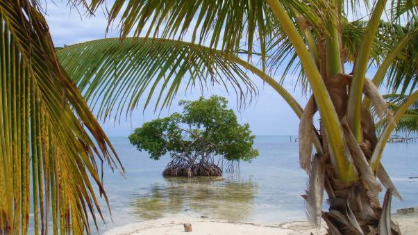 Isla de manglares