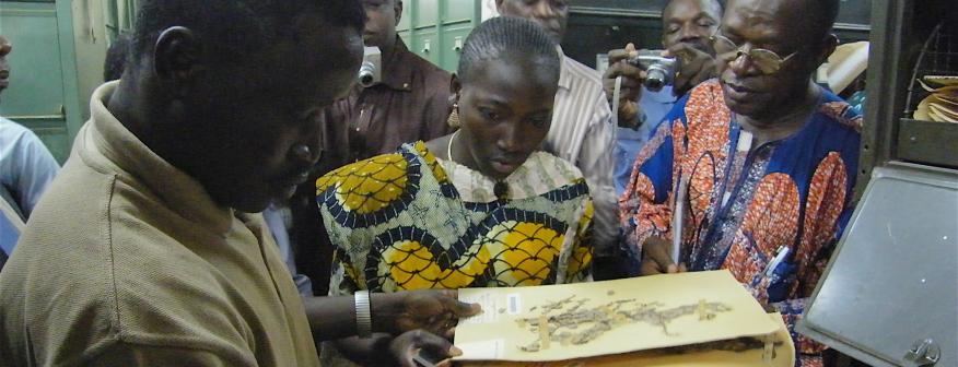 Biodiversity information professionals examining a herbarium sheet